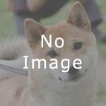 狂犬病予防接種について