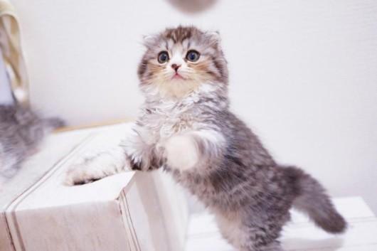 猫の問題行動 :飼い主の方を後ろから襲う