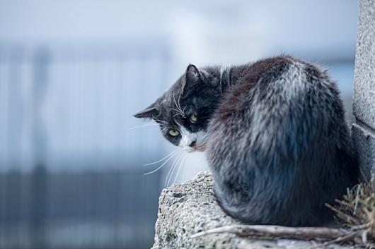猫の問題行動 :トイレ以外での排泄