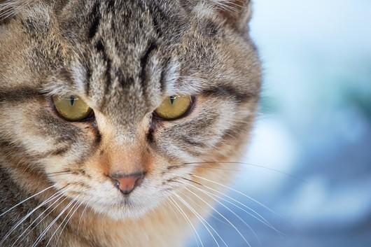 猫の問題行動 :転嫁行動