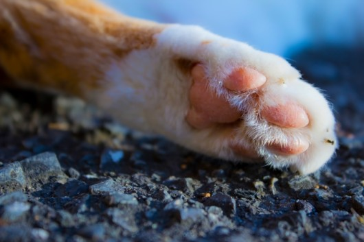 猫の問題行動 :不適切な場所での爪研ぎ