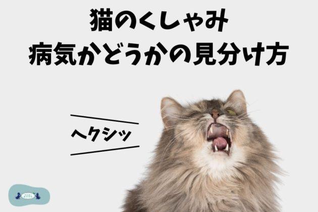 【猫のくしゃみ】病気かどうかの見分け方や原因を獣医師が解説